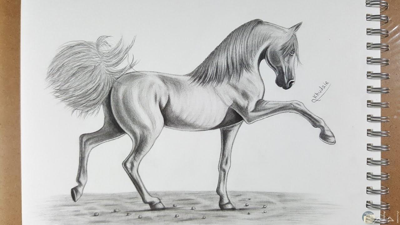 صورة مرسومة بالقلم الرصاص لحصان.