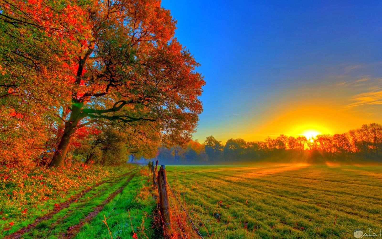 صورة شروق الشمس و الزهور حولها.