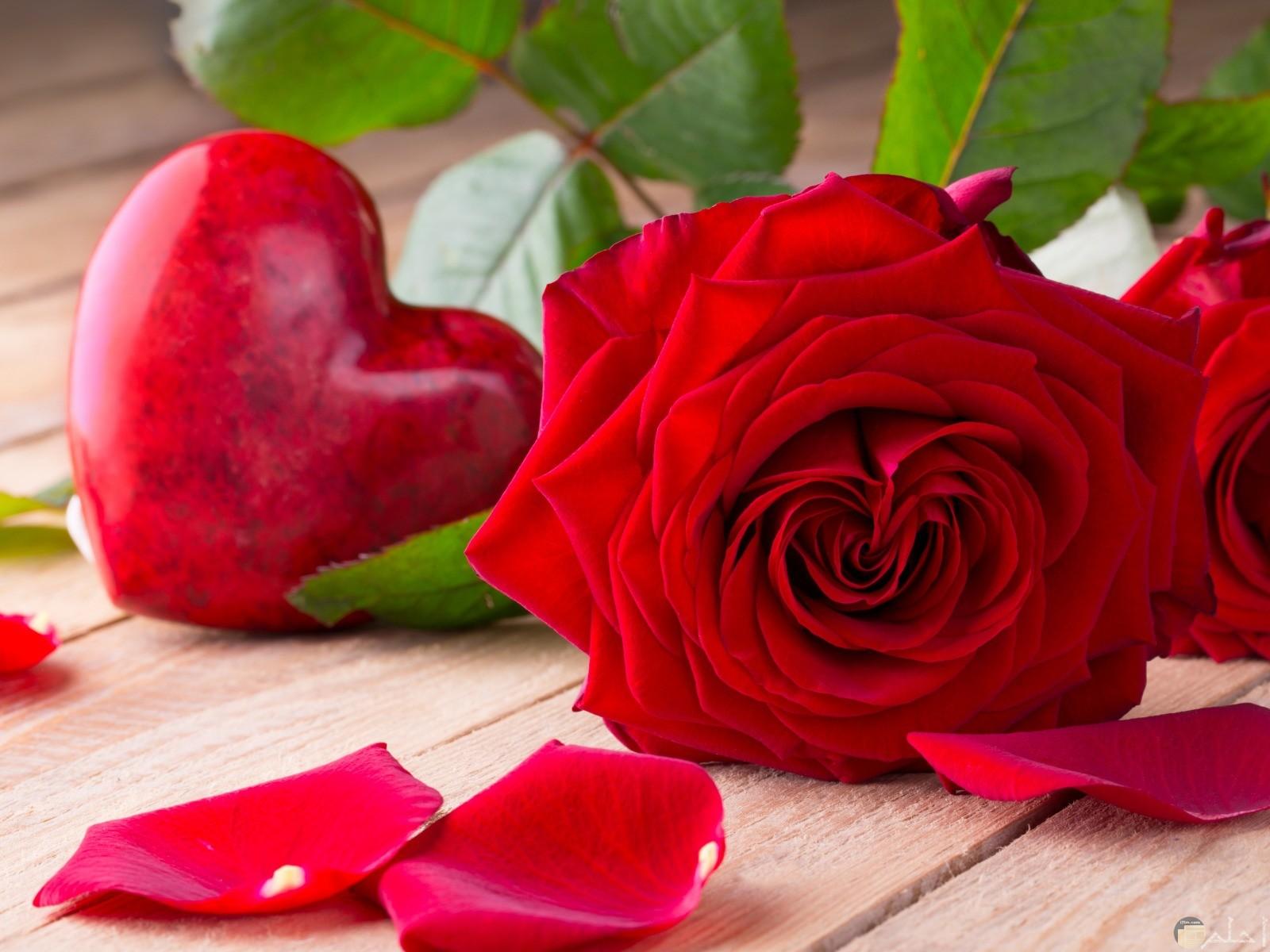ورد احمر و قلب تعبيراً للحب.
