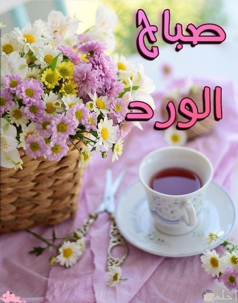 حلو الصباح بالخير و الورد.