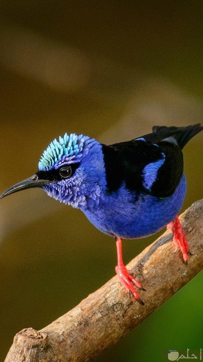 طائر جميل اللون على جزع شجرة.