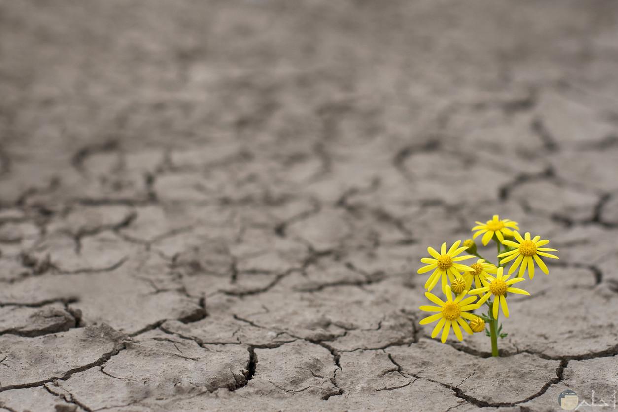 صورة زهرة وسط ارض قاحلة.