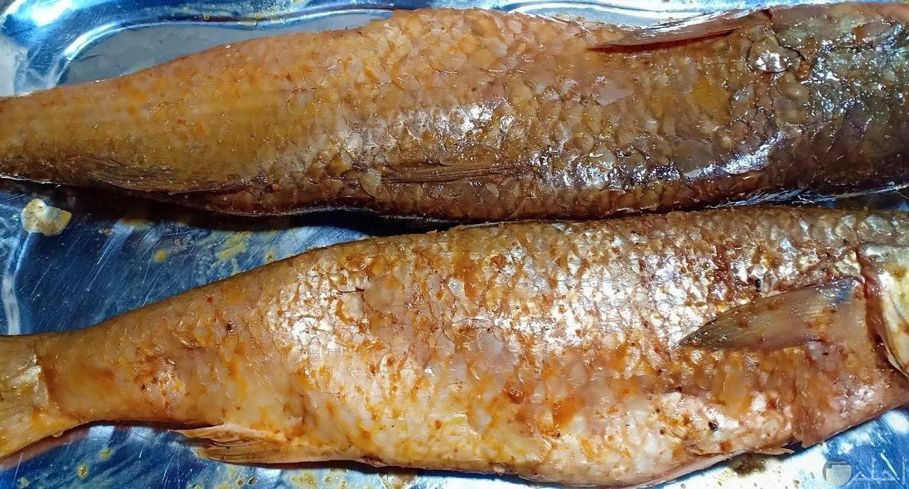 صورة سمك شم النسيم.