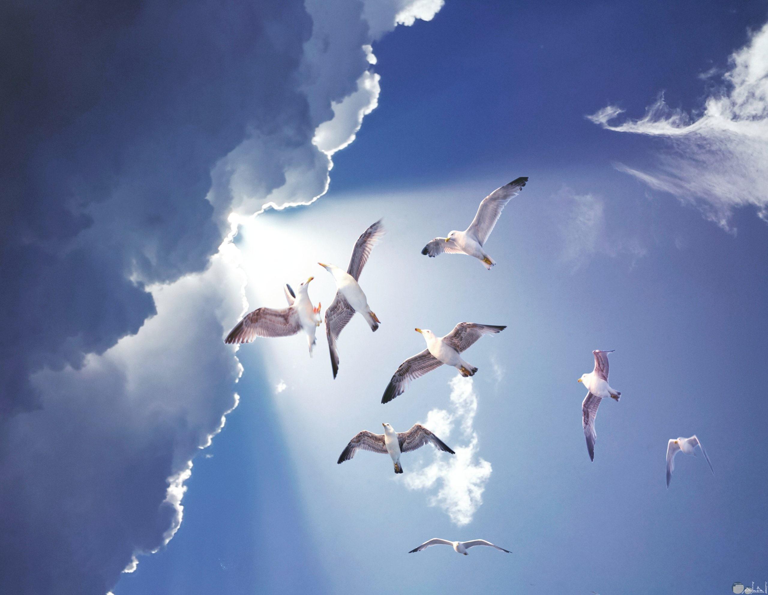 منظر رائع لطيور البحر بالقرب من سحاب