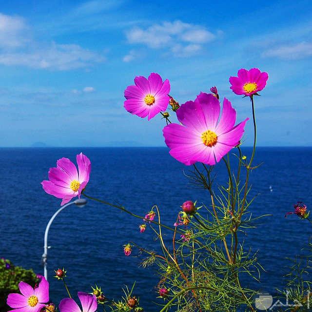 خلفية بحر وسماء وزهور