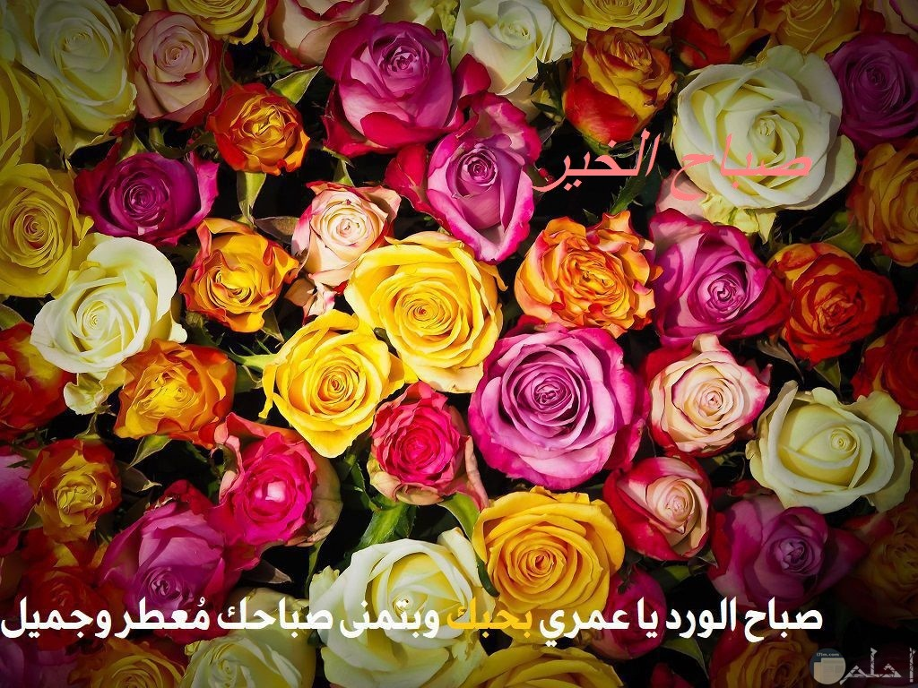صورة مجموعة ورد و صباح الخير.
