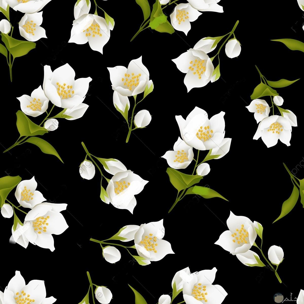 صورة لزهور الياسمين متناثرة الشكل.