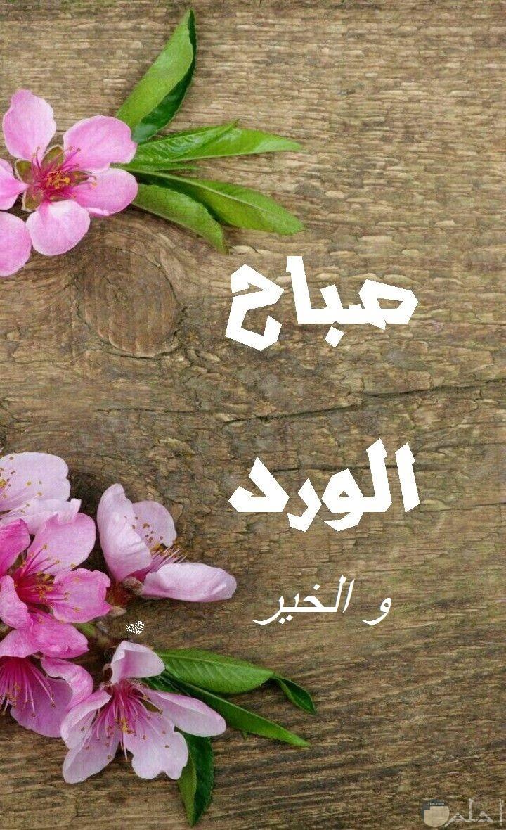 صباح الورد و الخير فى صورة.