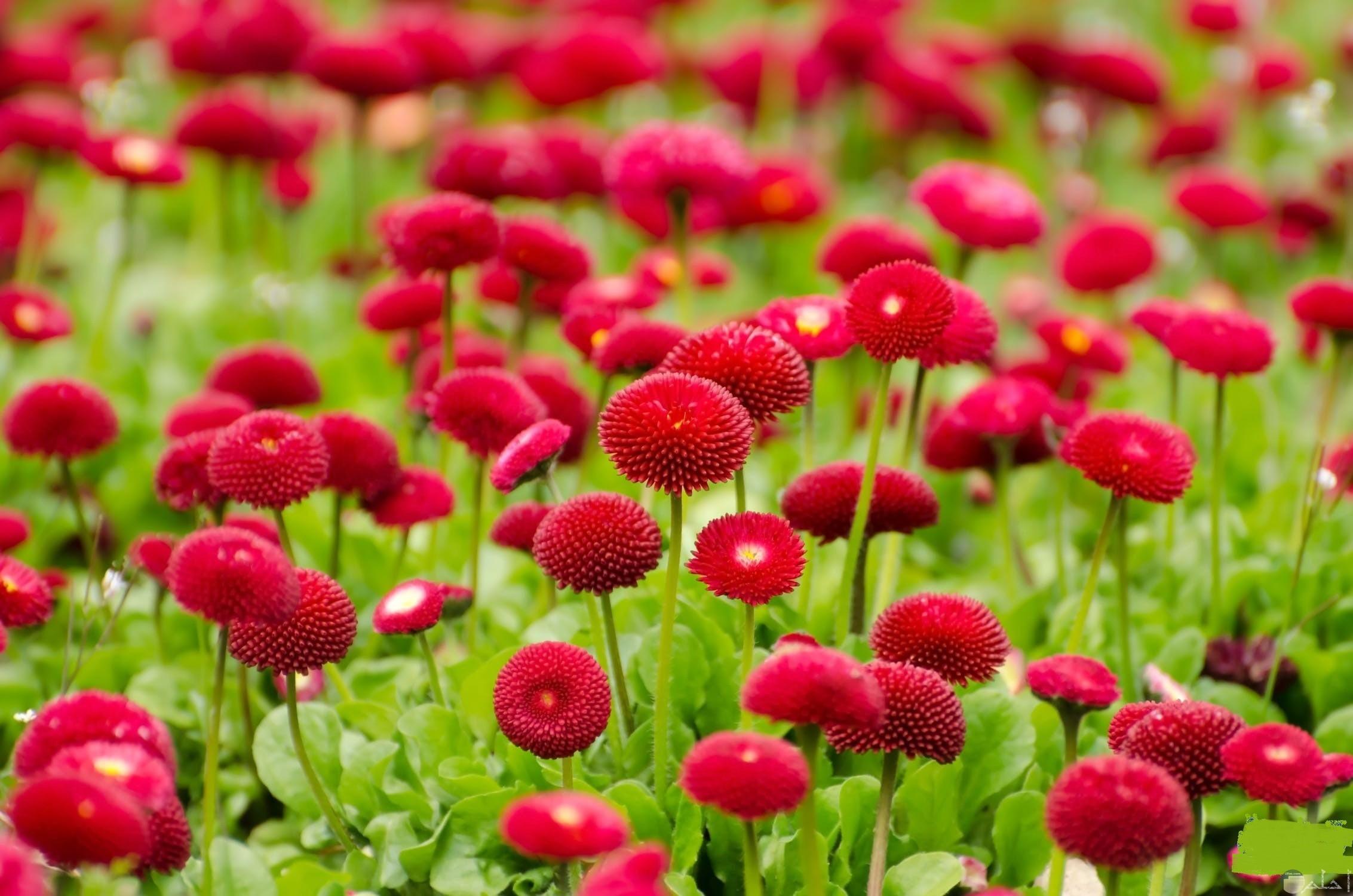 تتفتح الزهور فى شم النسيم.