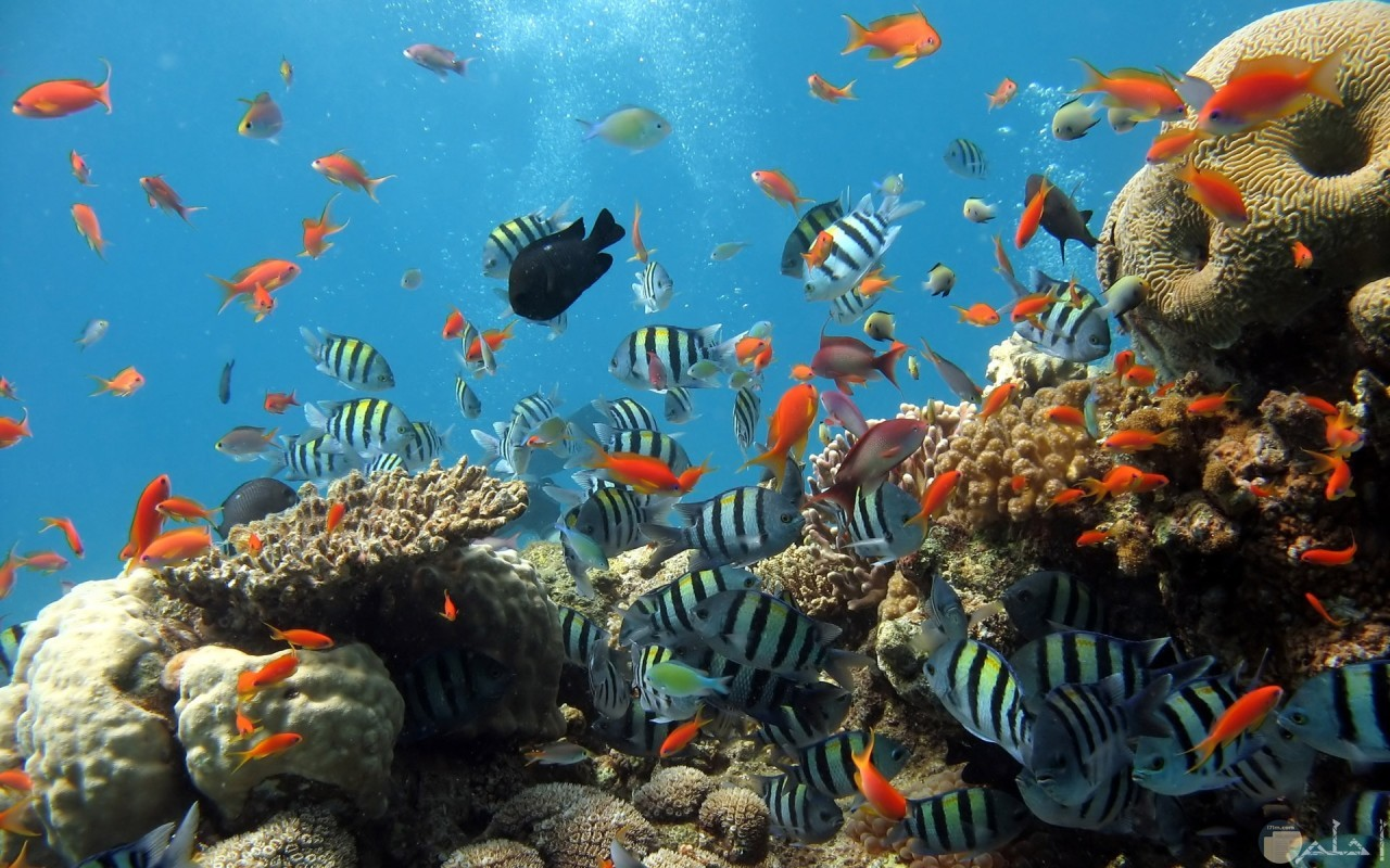 لقطات رائعه لقاع البحر