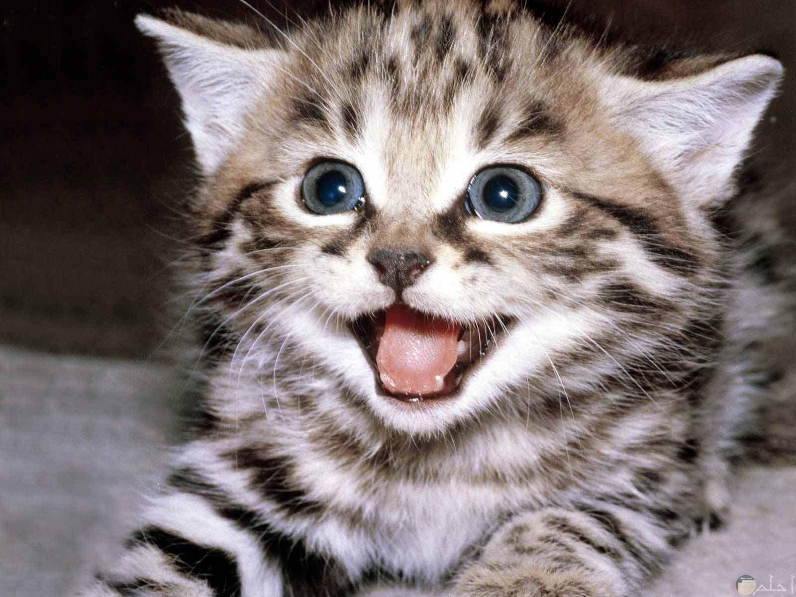 قطة بيبي مضحكة