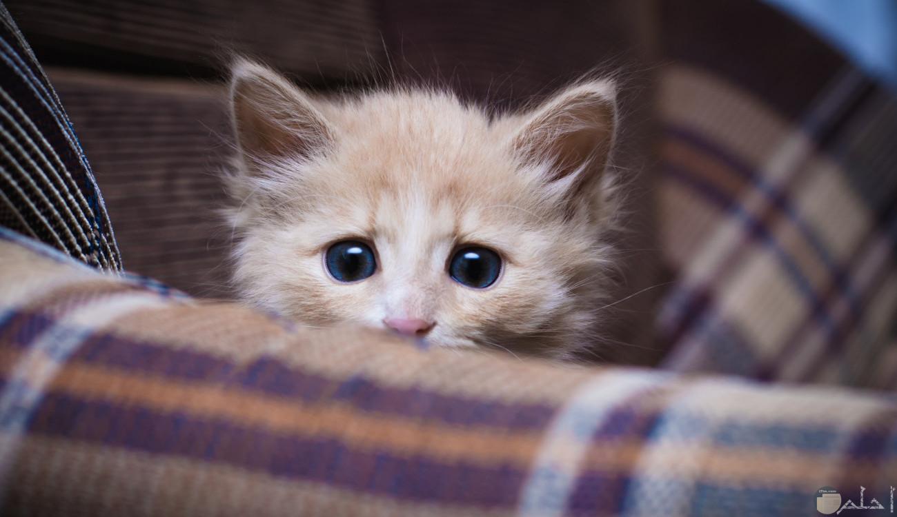 قطة بيبي كيوت اوي