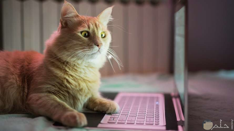 صورة قطة مخضوضة مضحكة
