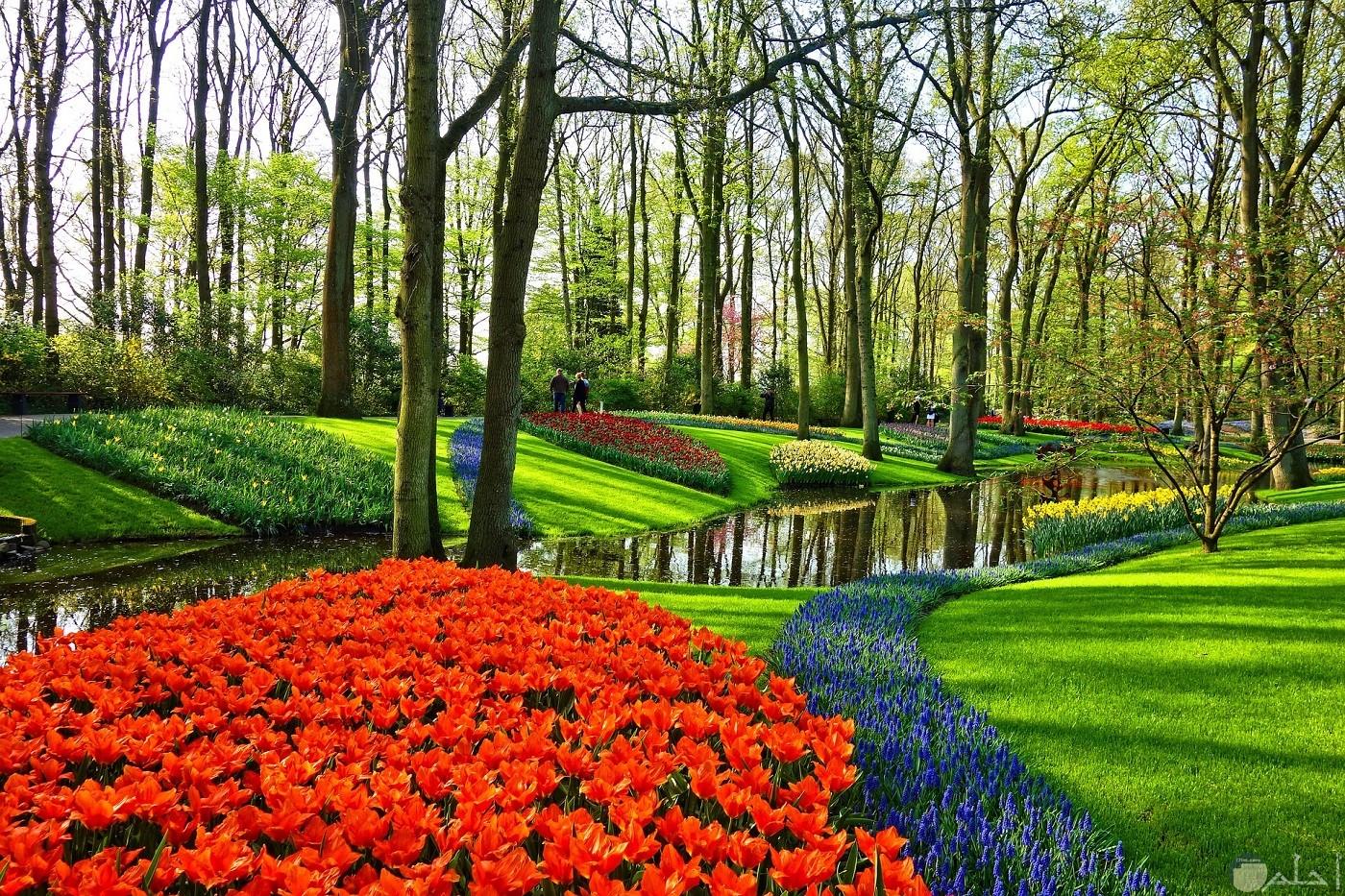 صورة حديقة جميلة جدا