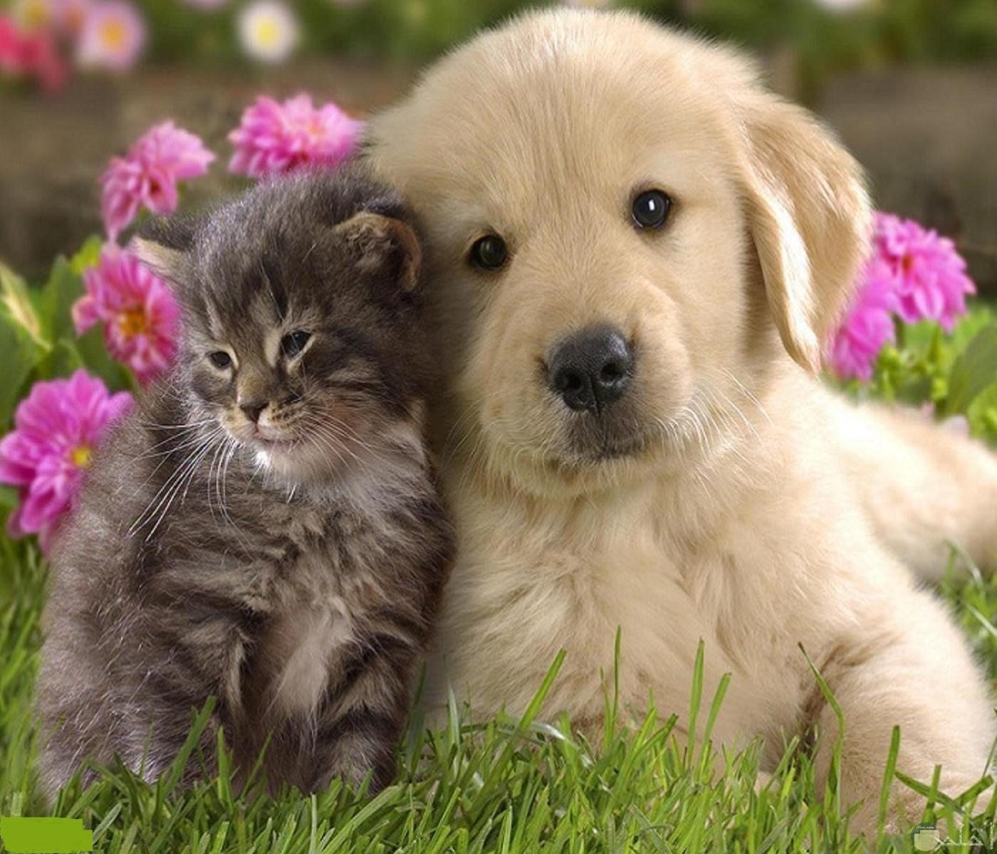 صورة تجمع بين قط و كلب صغير.