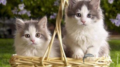 اجمل قطط في العالم