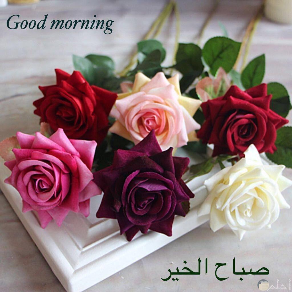 صورة صباح الخير باللغتين العربية و الانجليزية مع الورد.