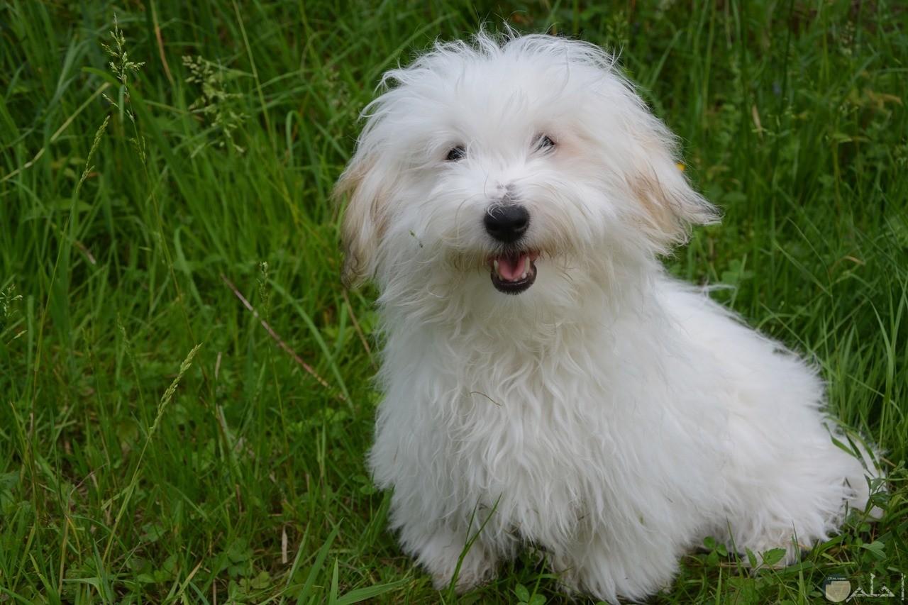 كلب صغير يبتسم لعدسة التصوير.