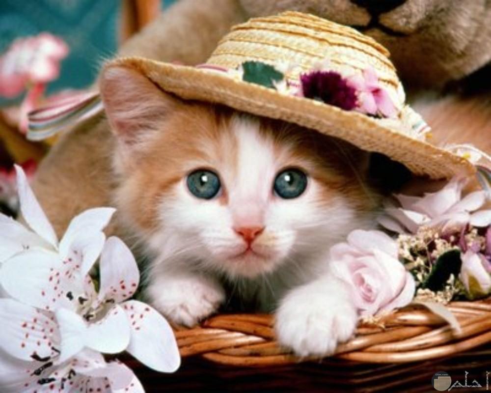 قطة ترتدي قبعة