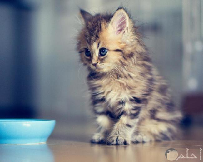 قطة ملونة جميلة