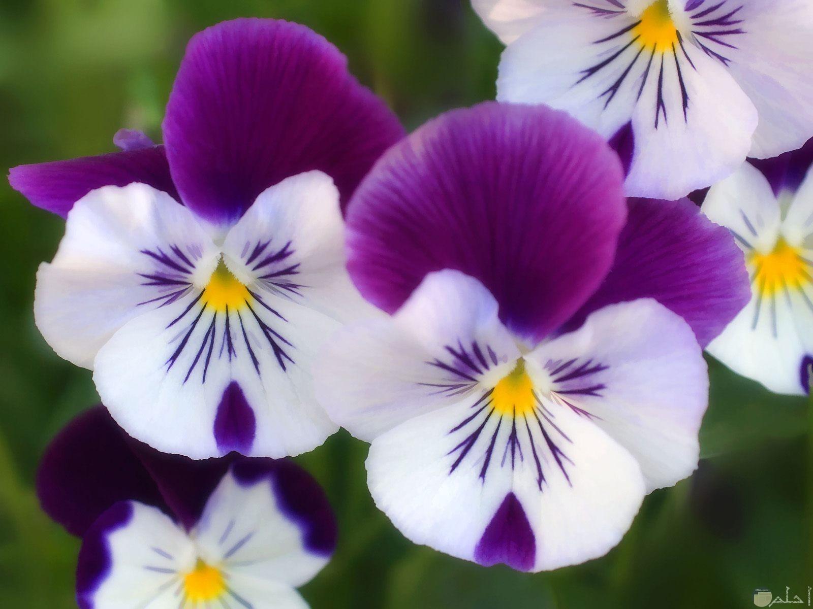 من اغرب انواع الزهور