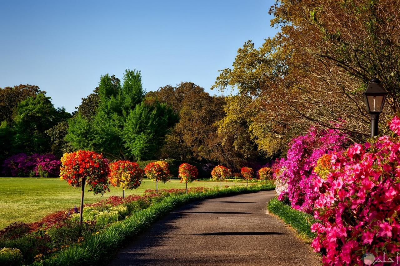 حديقة بها ورود واشجار ملونه