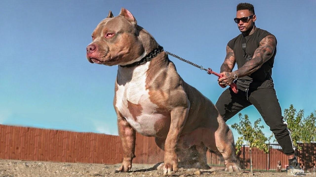 صورة كلب قوى بتعامله مع مدربه.