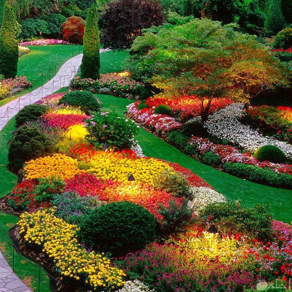 زهور جميلة ملونه ومنسقة داخل حديقة