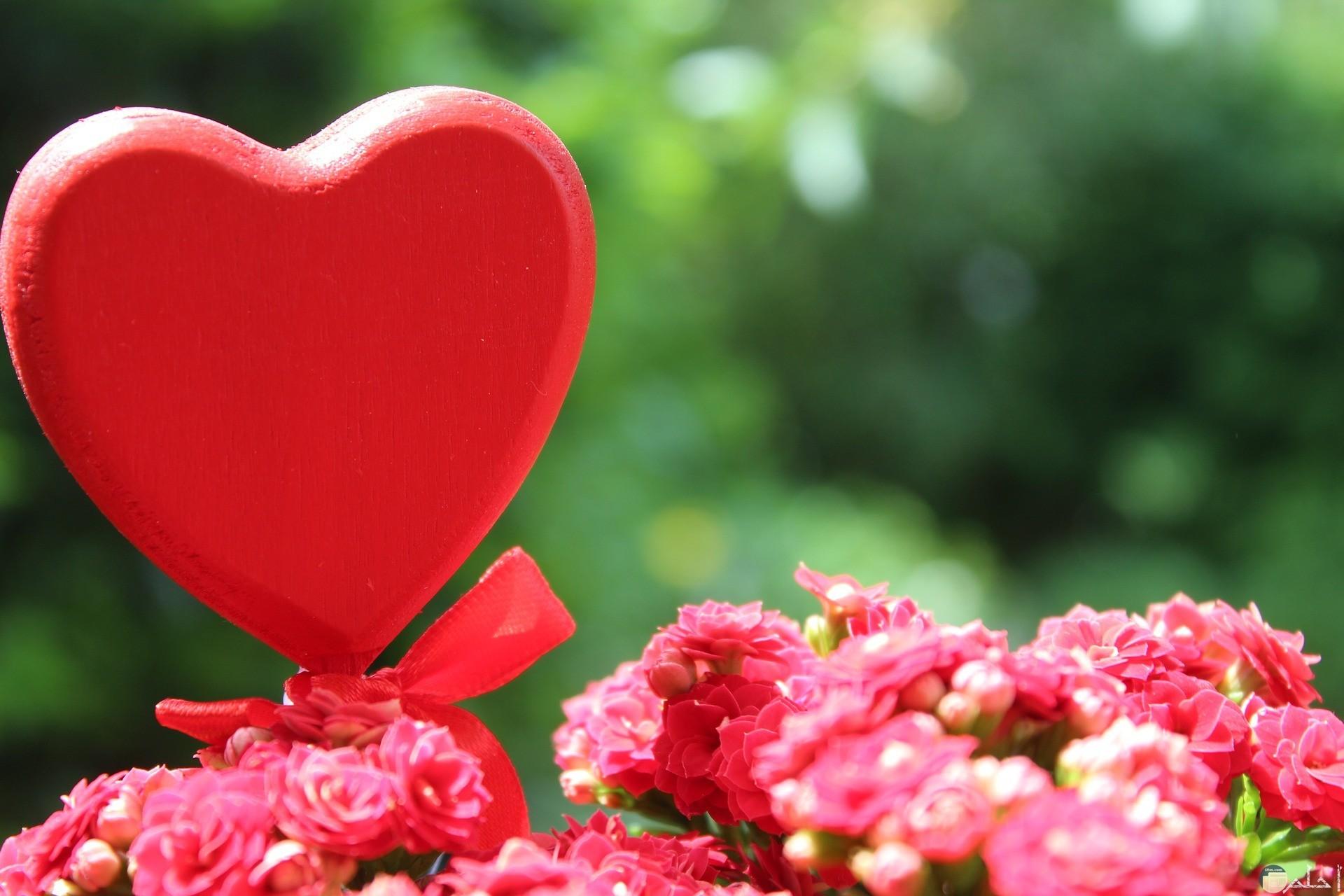 قلب احمر بجوار مجموعه ورود