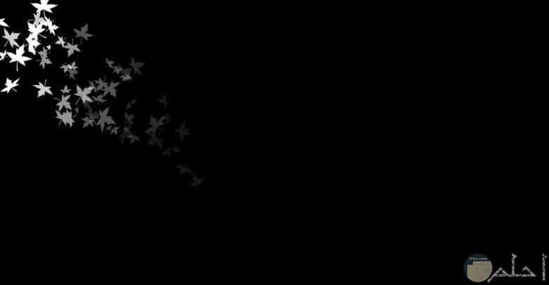 اجمل صوره سوداء