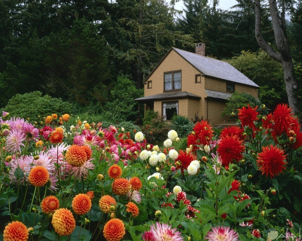 منزل جميل وسط حديقة ورد ملون