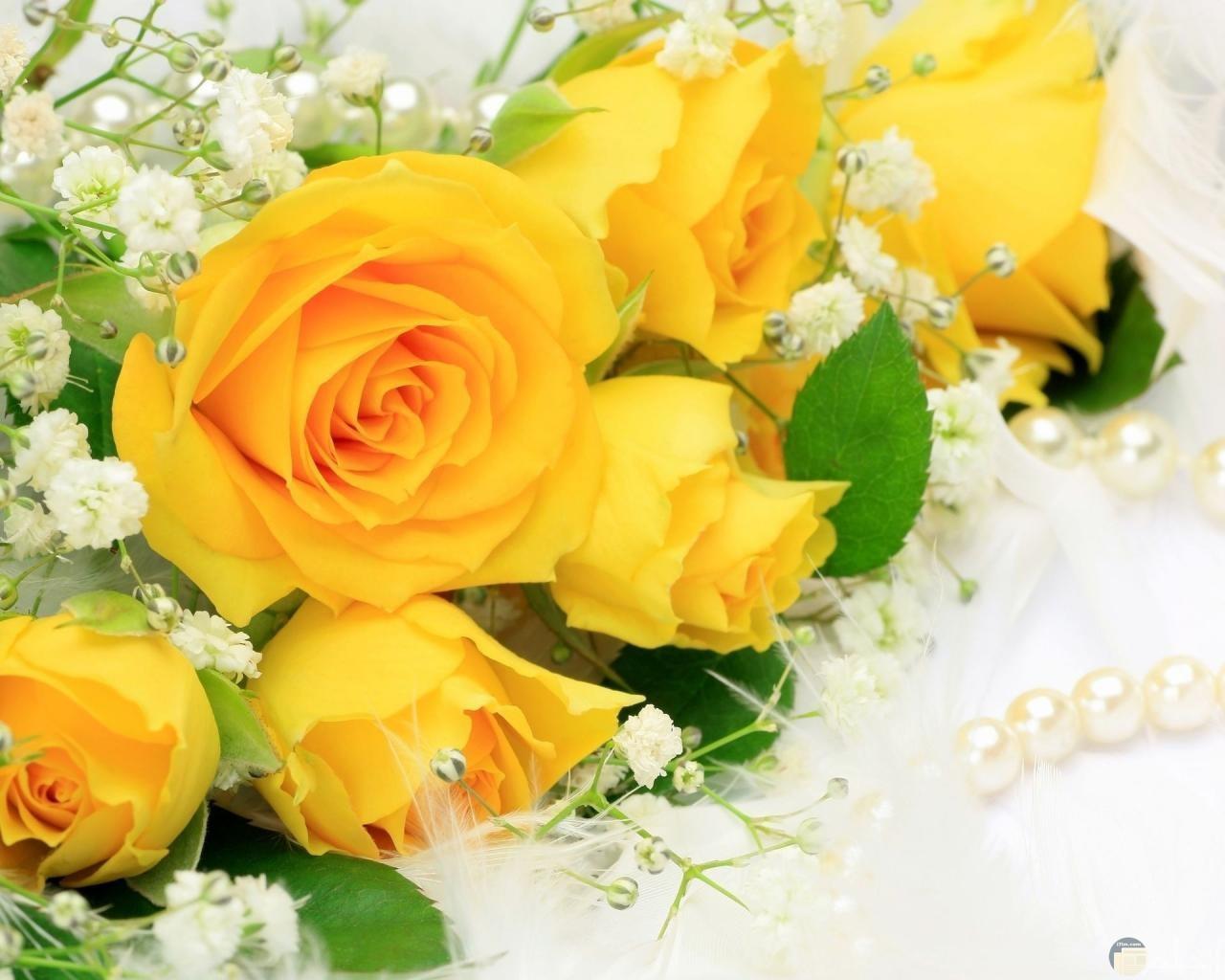 ورد اصفر جميل جدا