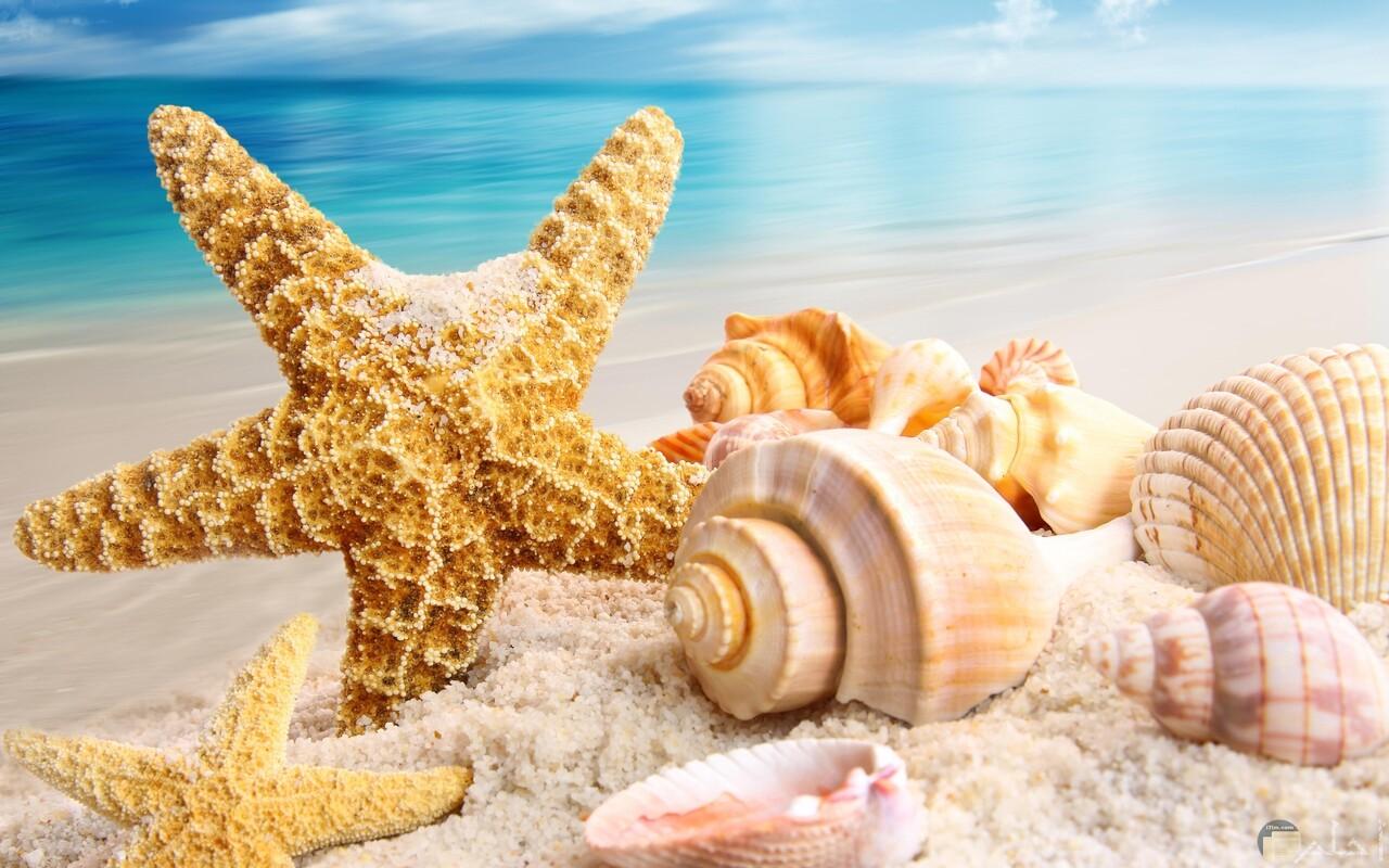 أجمل صور الصيف و رمزيات فصل الصيف و رمال الشاطئ و القواقع البحرية.