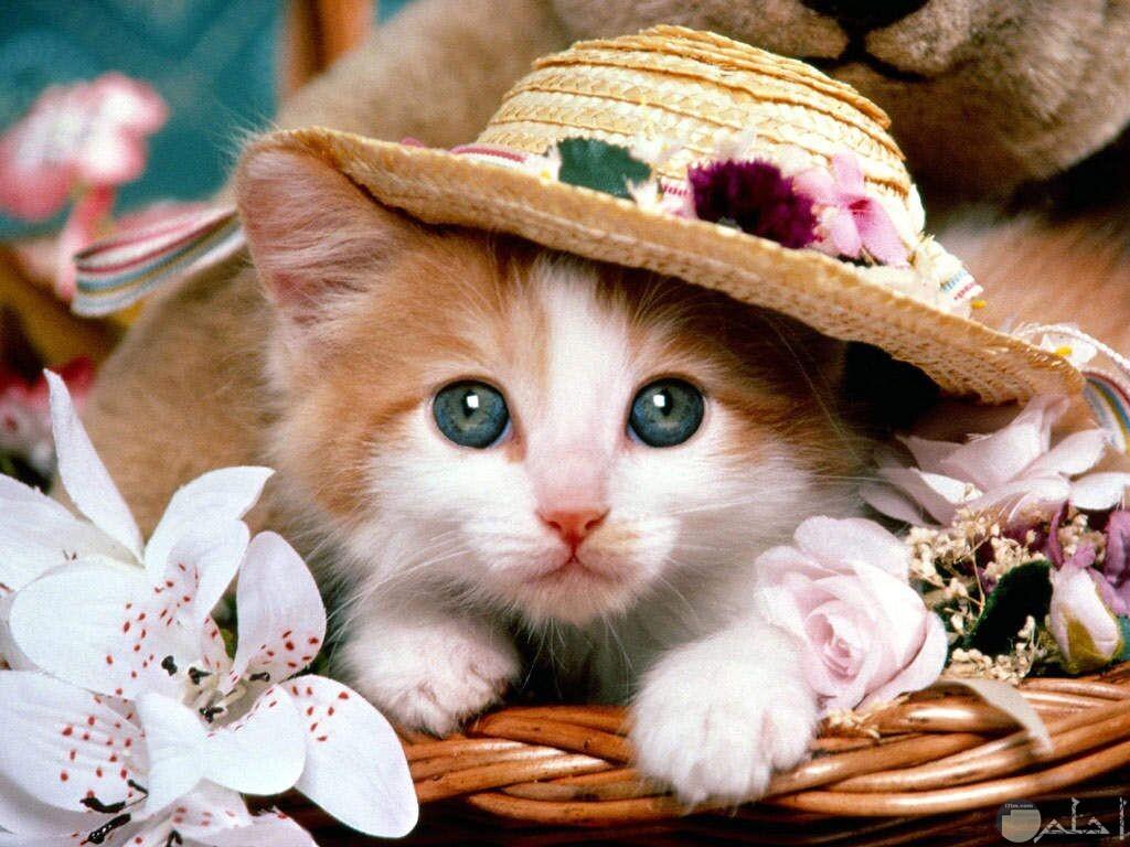 قطة ترتدي طقية جميلة.