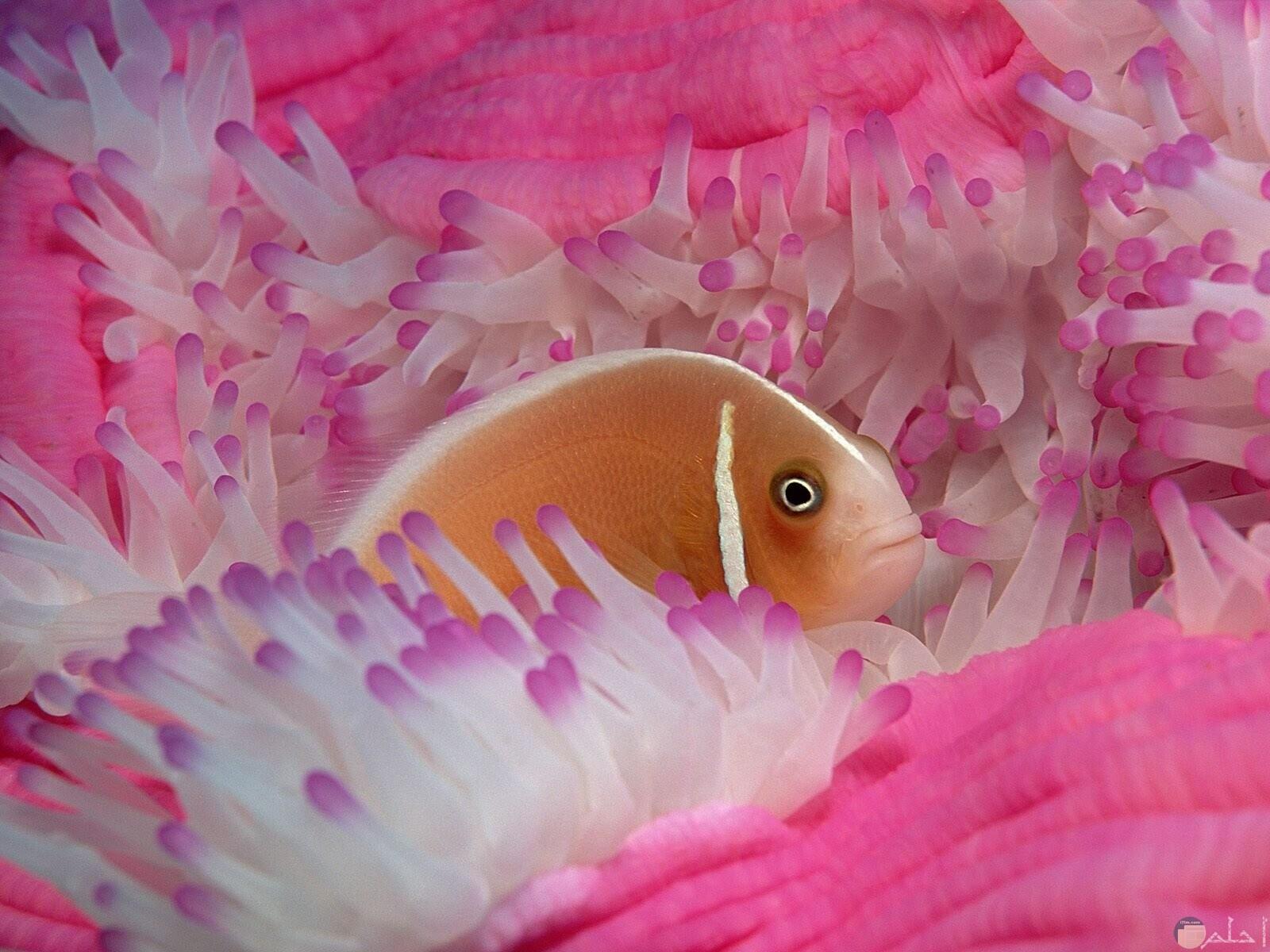صور-اسماك-جميلة ملونة