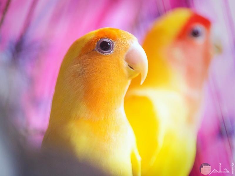 صور-ببغاوات-جميلة-ملونة-احلي-الوان-الببغاء-2