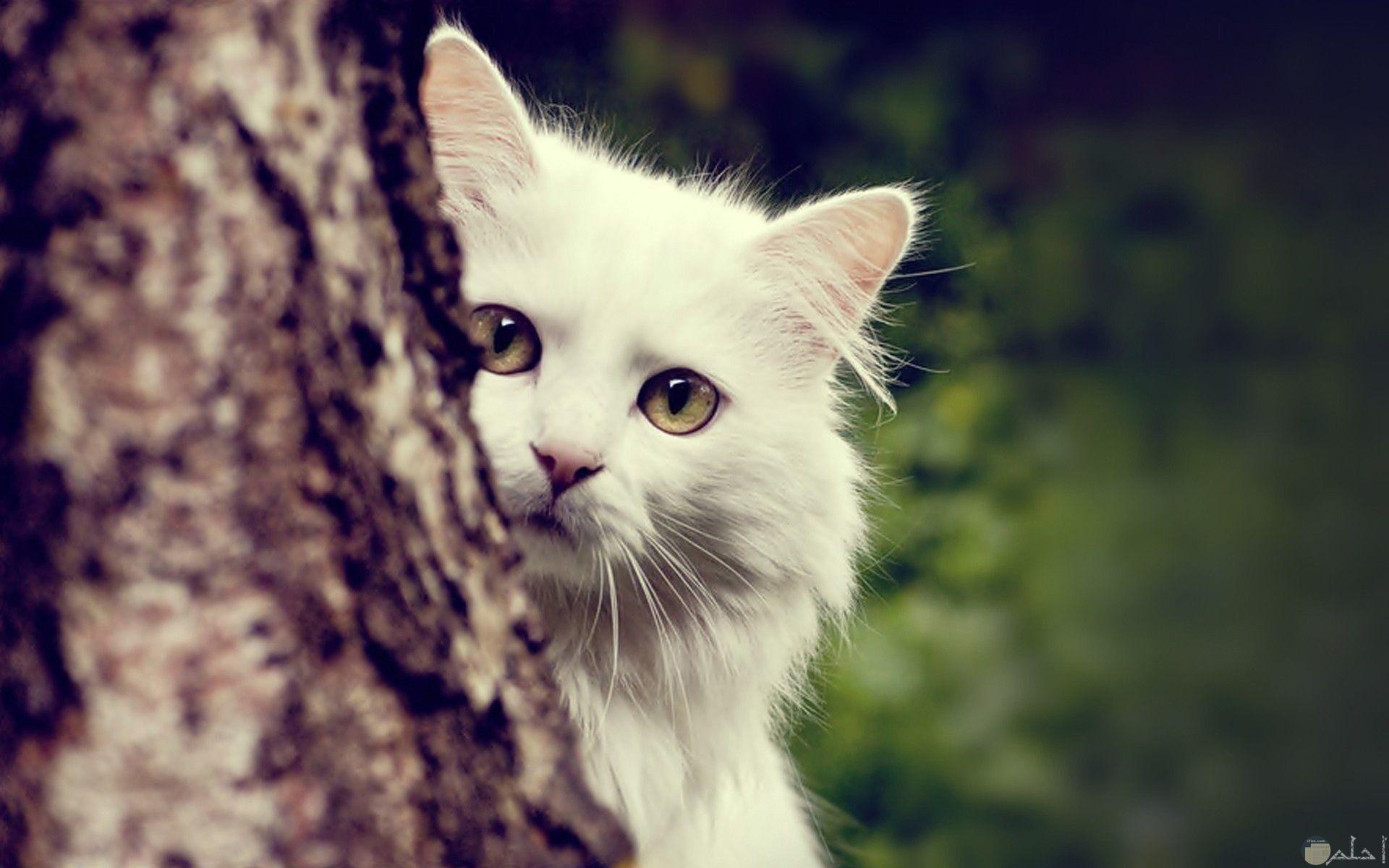 قطة تختبأ خلف شجرة.