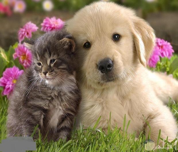 صورة قطة تتدلل على كلب معها.