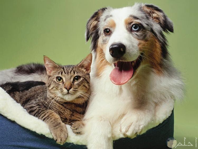 صورة صداقة بين كلب و قطة معاً.
