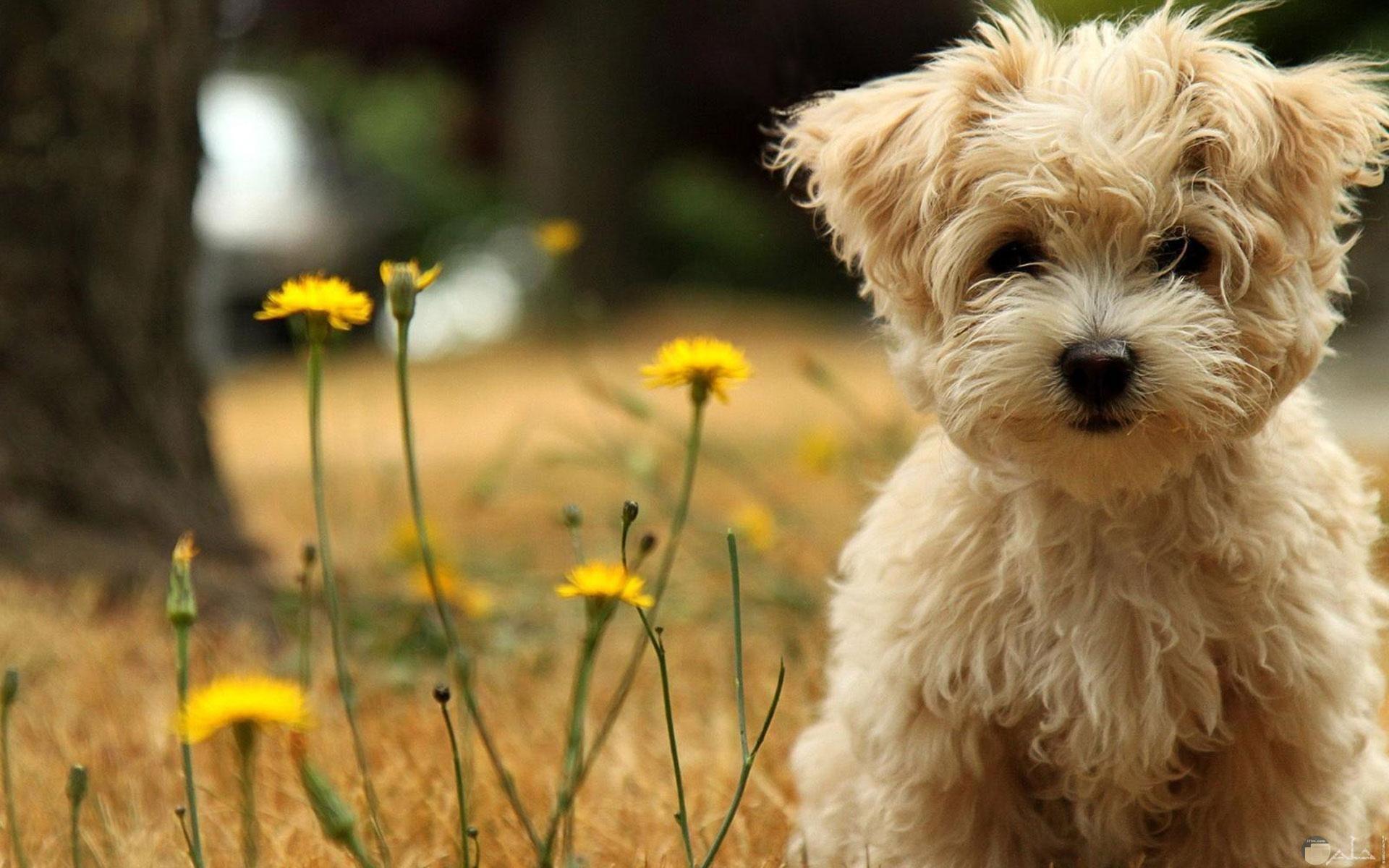 أجمل خلفيات الكلاب الجرو.