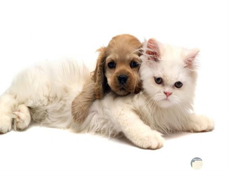قطة و كلب و قمة الإنسجام.