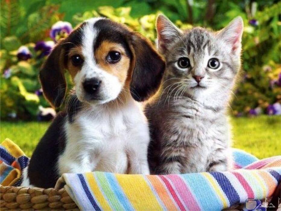 قطة مع كلب و نظرة موحدة.