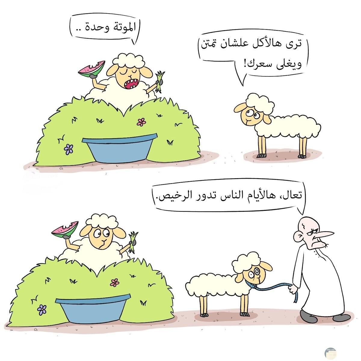 أضحك مع خروف العيد.