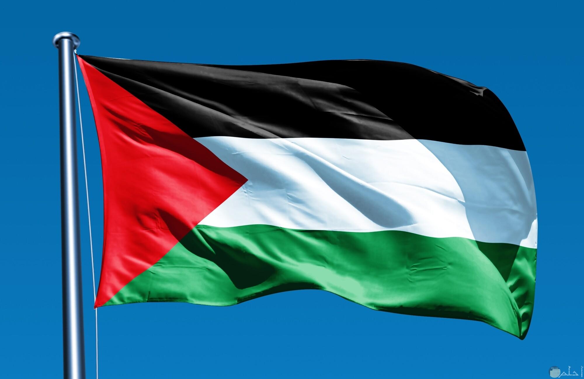 اجمل الصور لعلم فلسطين