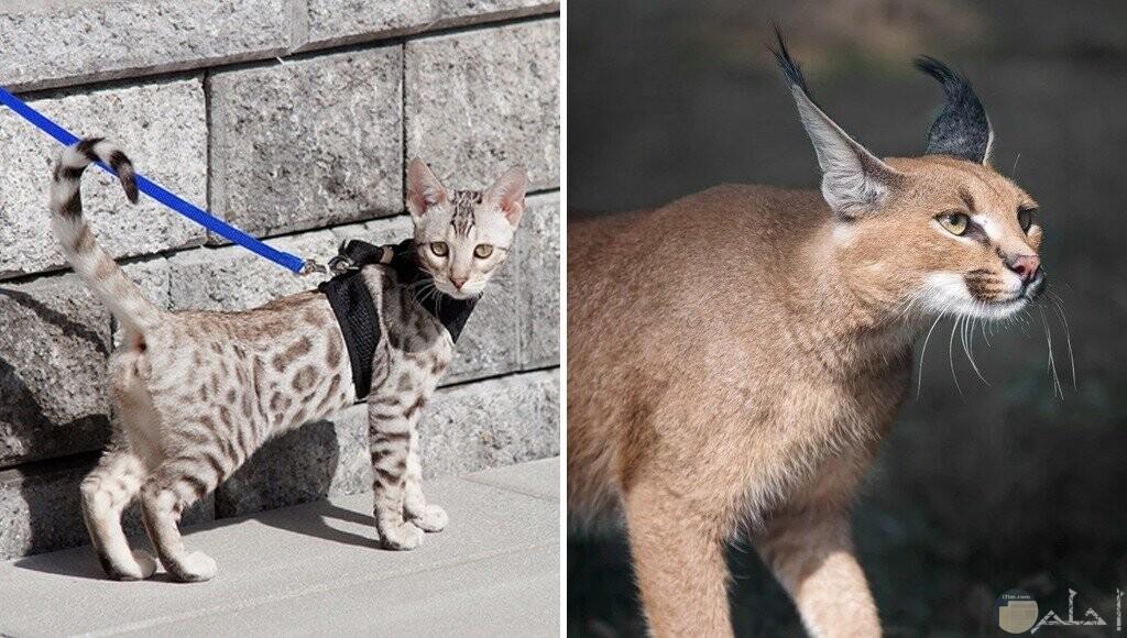 قطط غريبة ومريبة