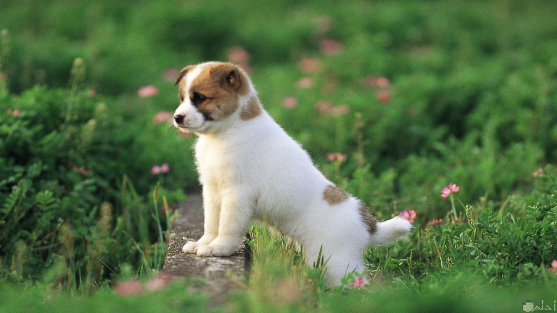 صورة كلب جرو بديع المظهر و اللون.