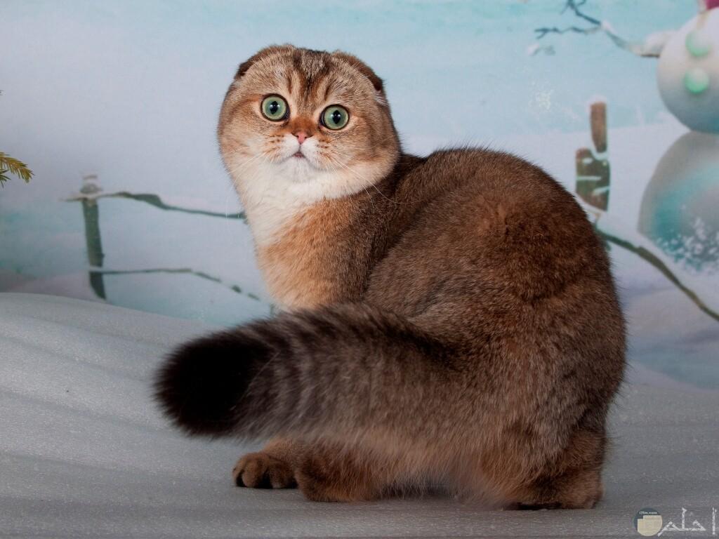 قطة غريبة دون اذن