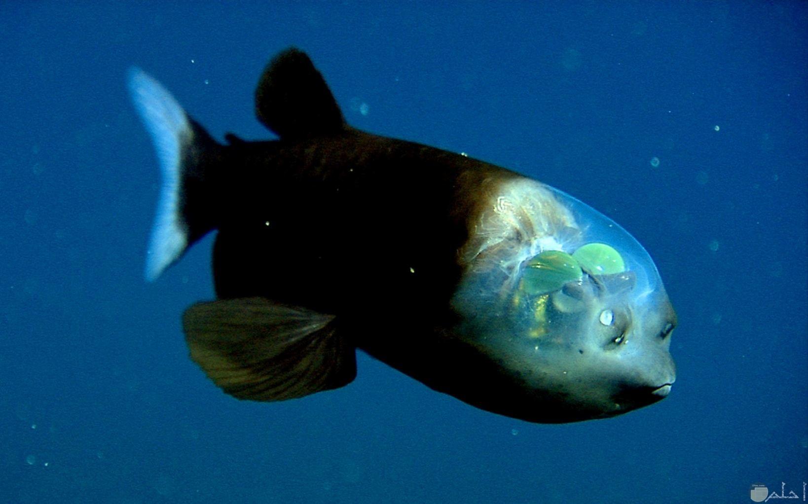 مخلوق بحري غريب