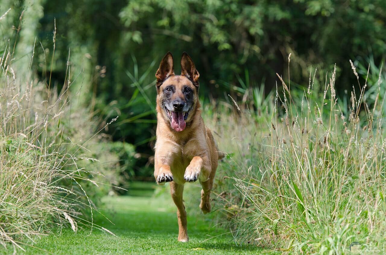 وسط ارضى زراعية كلب يجرى