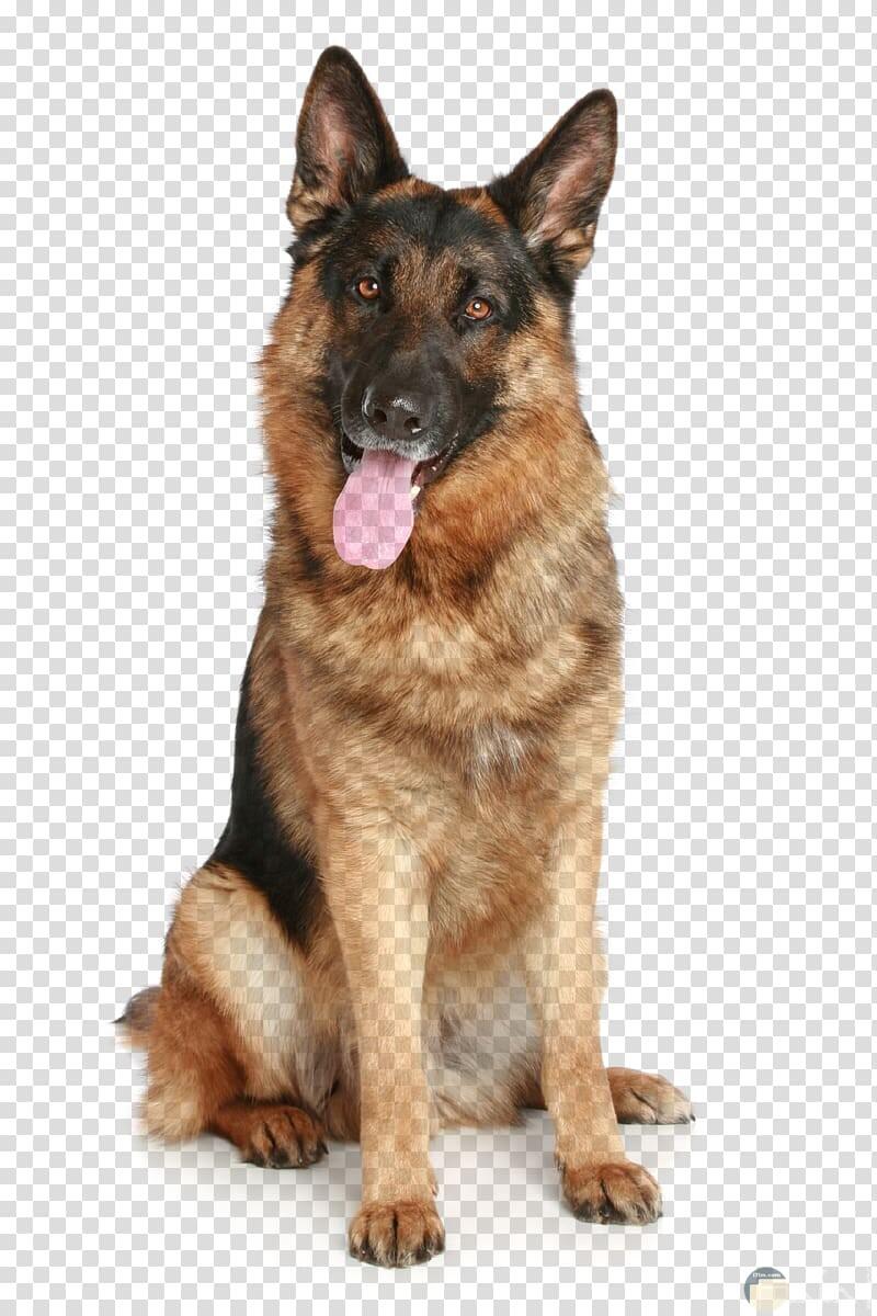 صورة لكلب ولف